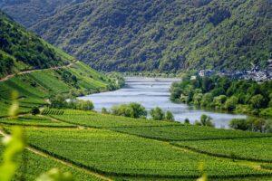 intinéraires des vins